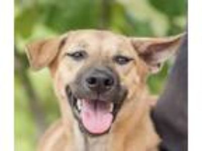 Adopt Eamny from Thailand a Shepherd (Unknown Type) / Mixed dog in Seattle