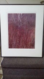 "SIGNED Eliot Porter ""Red Osier"" Near Great Barrington, MA.1981 DyeTransfer Print"