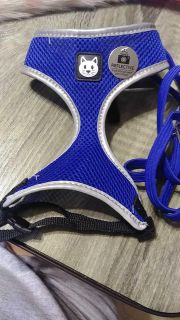 Cat harness ans lease