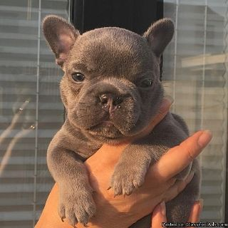 very cute puppies for sale