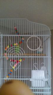 Three birds two cages