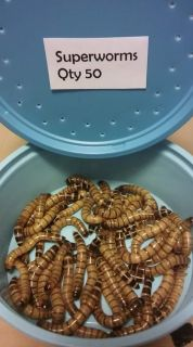 Chicken treats, live mealworms and superworms