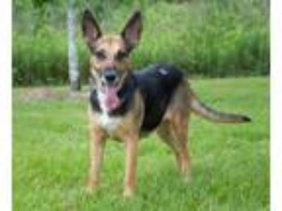Adopt Nadia, a Loving and Loyal Companion! a German Shepherd Dog