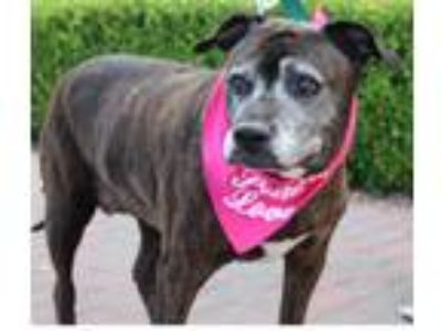 Adopt LITTLE GIRL a Brindle American Pit Bull Terrier / Mixed dog in Las Vegas