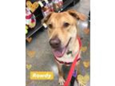 Adopt Rowdy a Tan/Yellow/Fawn Retriever (Unknown Type) / Mixed dog in West