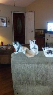 free adorable kittens (nacogdoches)