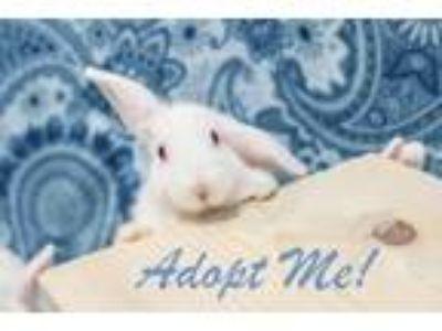 Adopt January thru November a Bunny Rabbit
