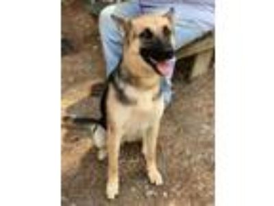 Adopt SHEENA a German Shepherd Dog