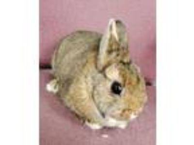 Adopt Rabbits available at Fairfield Petsmart a Lionhead