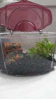 "0.5 gallon fish ""tank"""