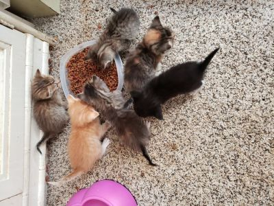 We have kittens!!