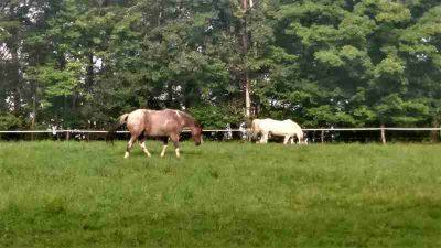 107 Campbell Rd Middleburgh Three BR, Gilboa Stables is a