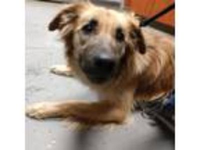 Adopt Wera a Brown/Chocolate Border Collie dog in Yuma, AZ (25327780)