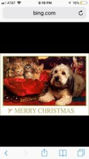 Christmas Pictures with your PETS