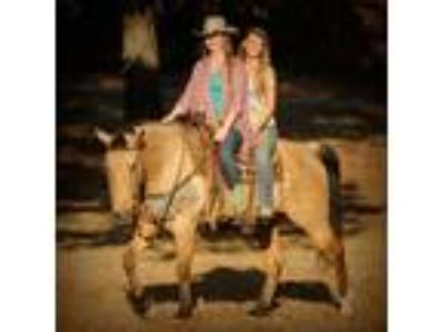 Beautiful Buckskin Ranch Gelding Perfect for Everyone