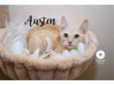 Adopt Pen 40 a Domestic Short Hair