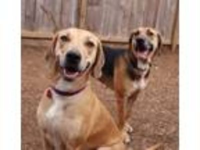 Adopt Margo and Mallory a Hound, Great Dane