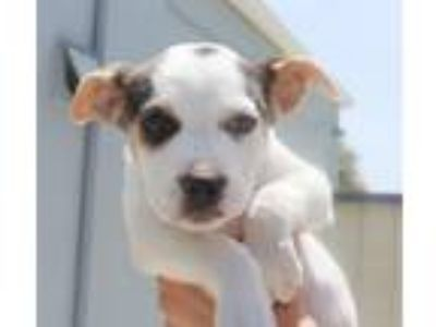 Adopt Glory a Mixed Breed