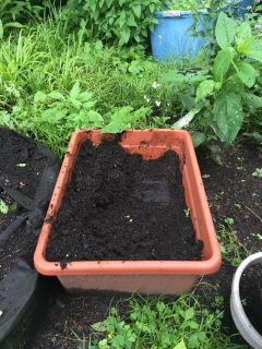 Large square pot for tomatoes