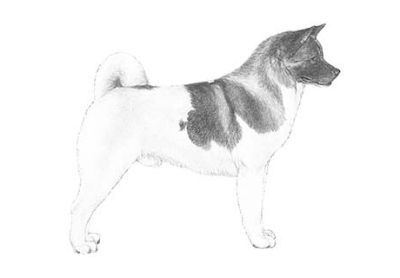 Akita Puppies - see website for photos