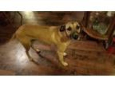 Adopt Buster a Black Mouth Cur