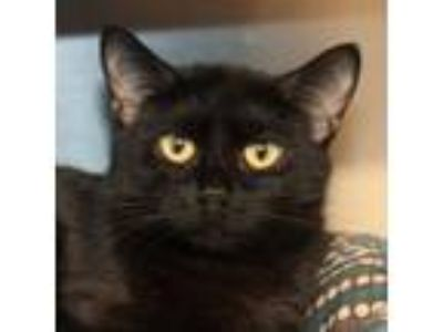 Craigslist - Animals and Pets for Adoption Classifieds in ...
