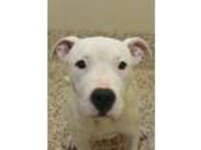 Adopt Snow a Mixed Breed