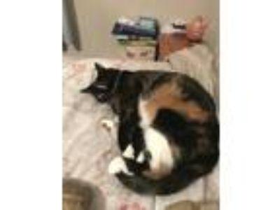 Adopt Paisley a Black & White or Tuxedo Calico / Mixed cat in Bullard