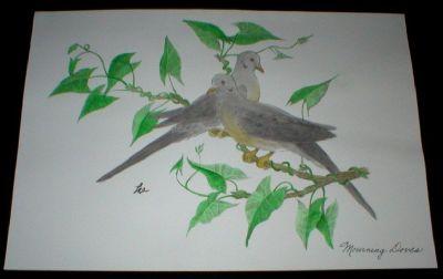 Hand Colored Original Art - Mourning Doves - Artist Signed - Unframed