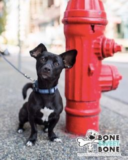 Doggie Daycare & Pet Grooming DTLA | BoneSweetBone