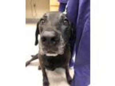 Adopt Conrad a Black Mixed Breed (Medium) / Mixed dog in Maumee, OH (25323332)