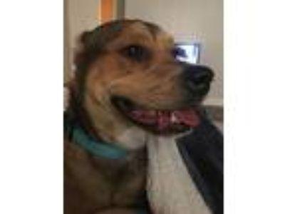 Adopt Buttercup a Red/Golden/Orange/Chestnut Terrier (Unknown Type