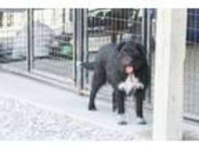 Adopt Molly a Black - with White Terrier (Unknown Type, Medium) / Terrier