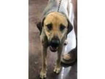 Adopt Alice-Avail NOW-CT a Shepherd, Hound