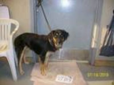 Adopt 8704 a Border Collie