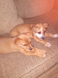 free dogs (lake of the pines)