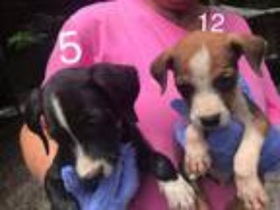 Adopt Puppy 12 a Mixed Breed
