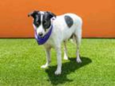 Adopt BELLA a Collie, Mixed Breed