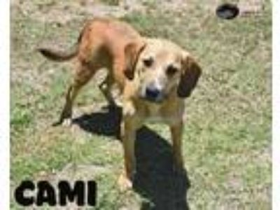 Adopt Cami a Hound (Unknown Type) / Mixed dog in Gautier, MS (25263907)