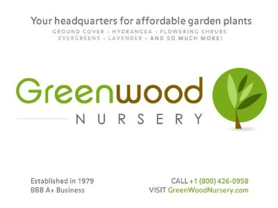 Drought Tolerant Plants For Your Garden Now Shipping