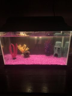 10 gallon fish tank comes with everything shown