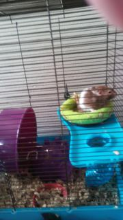Hamster cage and stuff