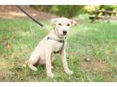 Puppy - Rock Hill Classifieds - Claz org
