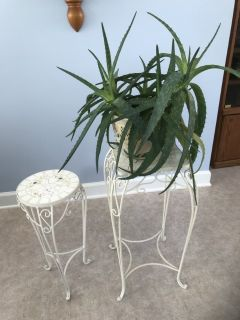 Mosaic Plant Stands