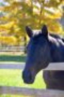 Sadie Thoroughbred Horse