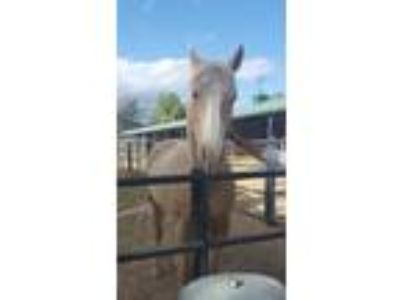 Adopt PRINCESS-Special Needs a Palomino Palomino / Mixed horse in West Los