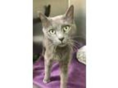 Adopt Jolee (available Saturday 5/23/19) a Domestic Shorthair / Mixed cat in