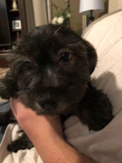Animals and Pets for Adoption Classifieds in Caldwell, Texas