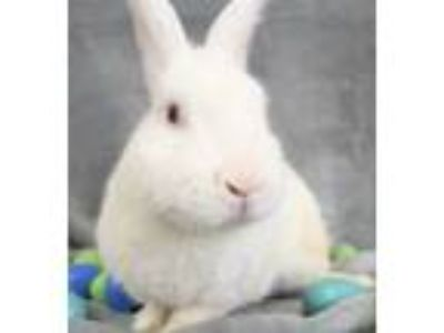 Adopt Dwayne Johnson a Bunny Rabbit