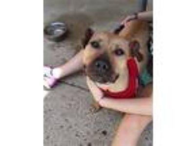 Adopt Piper a Terrier, Basset Hound